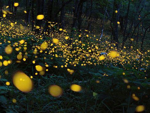 جنگلی در منطقه نینوهه ژاپن