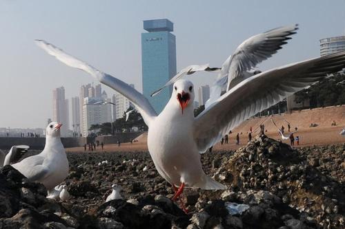مرغان دریایی در ساحل شهر گینگدائو چین