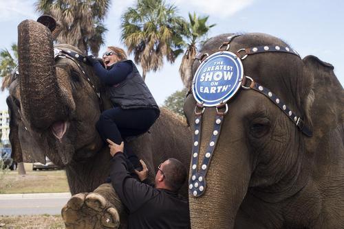 سوار شدن روی فیل های آموزش دیده یک سیرک – فلوریدا آمریکا