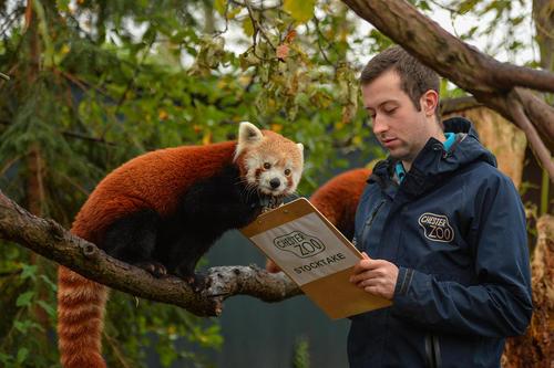 سرشماری حیوانات باغ وحش چستر انگلیس