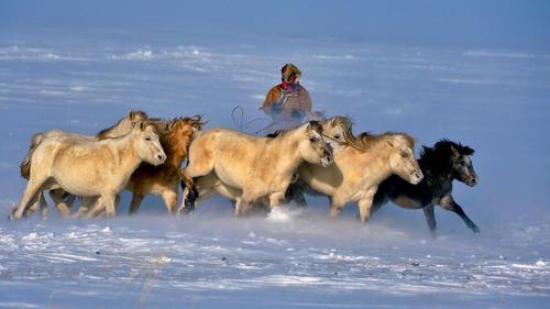 گله دار اسب در منطقه خودمختار مغولستان در شمال چین