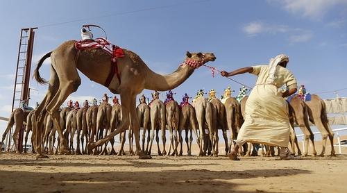 مسابقات سالانه شتر سواری ابوظبی – امارات