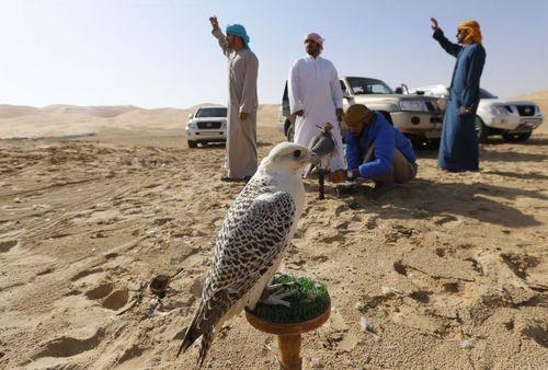 آموزش پرندگان شکاری در صحرای لیوا در نزدیکی شهر ابوظبی امارات