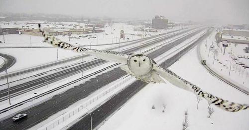 پرواز جغد – مونترال کانادا