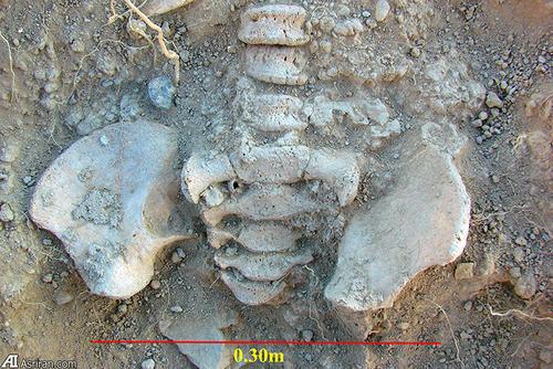 بقایای استخوانی یک کودک از دوره مفرغ