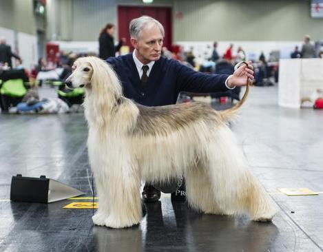 مسابقات انتخاب بهترین سگ در نورنبرگ آلمان