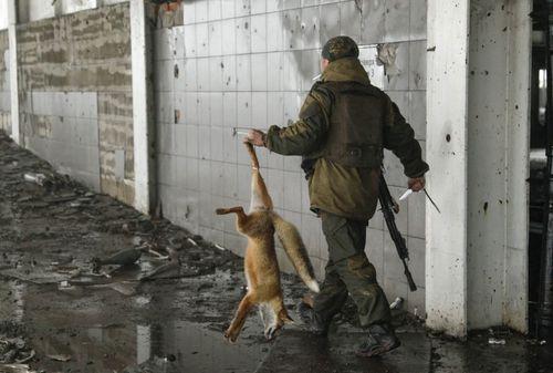 کشتن یک روباه از سوی نیروهای جدایی طلب اوکراین در فرودگاه بین المللی شهر دونتسک در شرق اوکراین