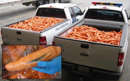 دستگیری محموله یک تنی ماریجوانا در مرز آمریکا و مکزیک. قاچاقچیان تلاش داشتند این محموله را با پوشش بسته بندی هویج منتقل کنند