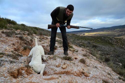 سگ شکاری به دنبال خرگوش – شمال اسپانیا