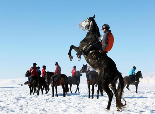 جشنواره پرورش اسب – چین