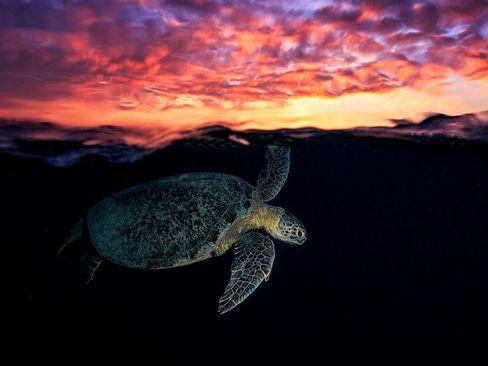 زیر آفتاب- جزیره کومور