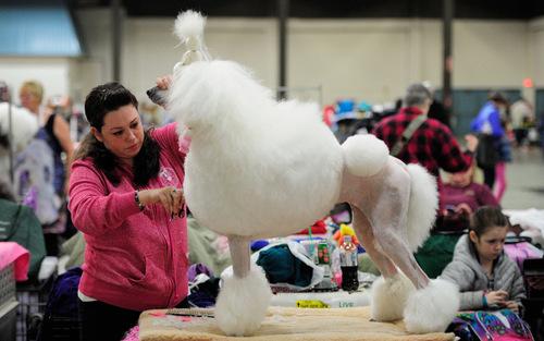 نمایشگاه سگ های خانگی در پورتلند ایالت اورگان آمریکا