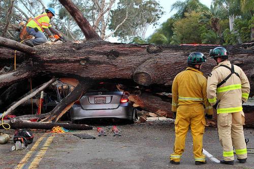 افتادن یک درخت در جاده ای در سان دیه گه کالیفرنیا. در این حادثه راننده خودرو جان سپرد