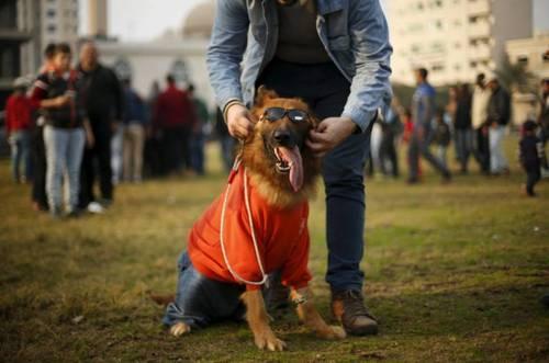 مسابقه نمایش سگ های خانگی در نوار غزه