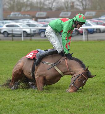 مسابقات اسب سواری در کمپتون انگلیس