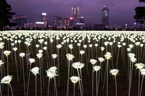 نصب 25 هزار گل لاله سفید مصنوعی در شهر هنگ کنگ