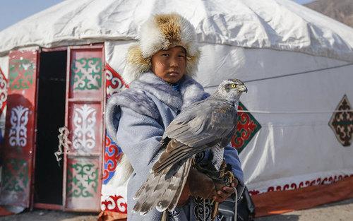 شکارچی جوان شاهین – قزاقستان