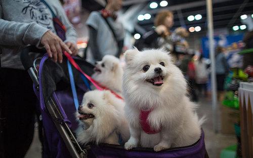 نمایشگاه سالانه سگ های خانگی – هنگ کنگ