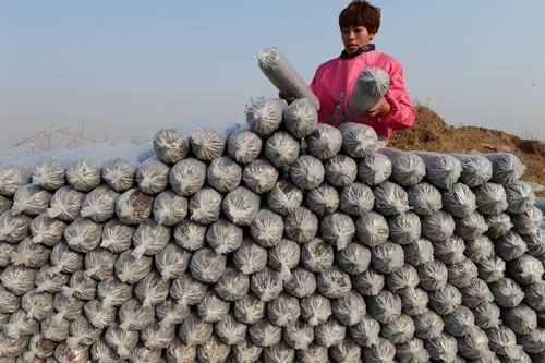 کیسه های کاشت قارچ – چین