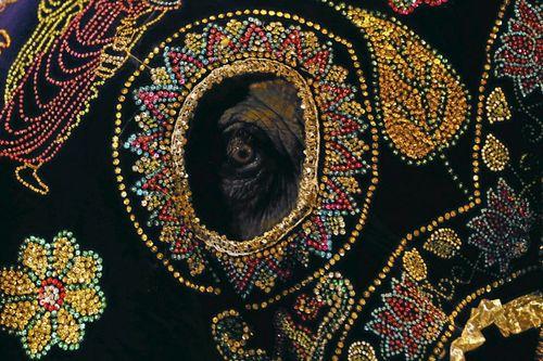 جشنواره سالانه فیل ها در شهر کلمبو پایتخت سریلانکا
