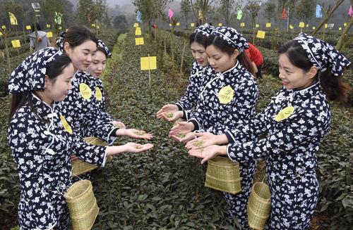 جشنواره چای بهاره در ییبین چین