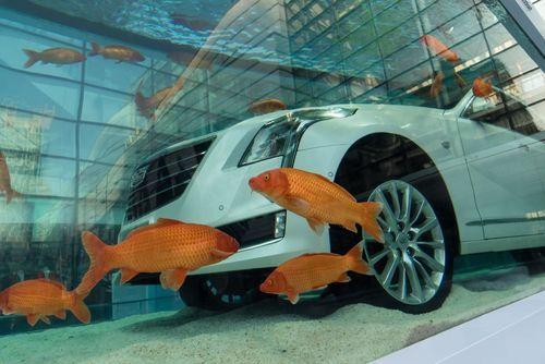گذاشتن یک خودروی لوکس کادیلاک داخل یک آکواریوم بزرگ ماهی در فروشگاهی در شانگهای چین