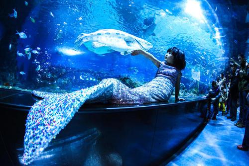 دختر بچه ای در لباس پری دریایی در آکواریوم شهر تیانجین چین
