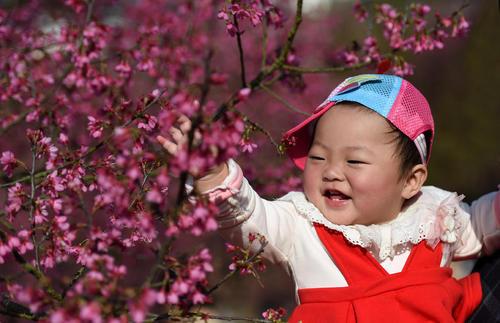 کودک چینی و شکوفه های درخت گیلاس باغی در شهر نانینگ