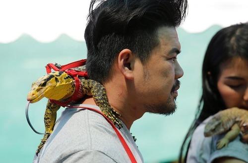 نمایشگاه حیوانات خانگی در بانکوک تایلند