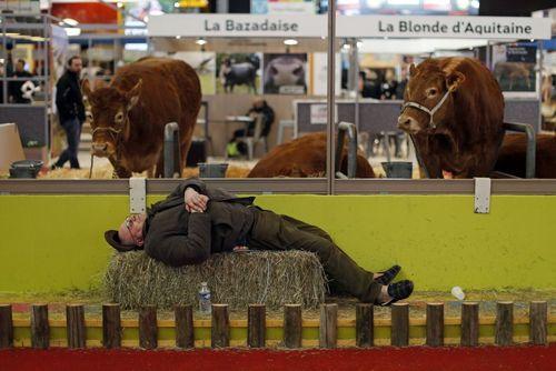 نمایشگاه بین المللی کشاورزی در پاریس