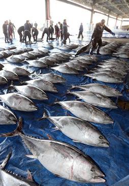 بازار ماهی در جزیره جیجو کره جنوبی