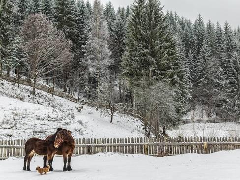 روستایی در رومانی