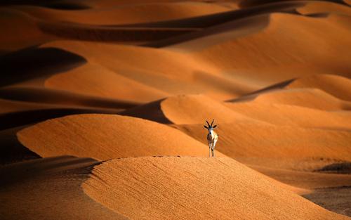 صحرایی در مرز امارات و عمان