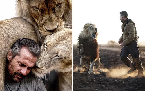 تصویر کوین ریچاردسون با شیرهای آفریقایی. ریچاردسون یک رفتار شناس حیوانات اهل آفریقای جنوبی است که روی حیوانات بومی آفریقا مطالعه و تحقیق می کند