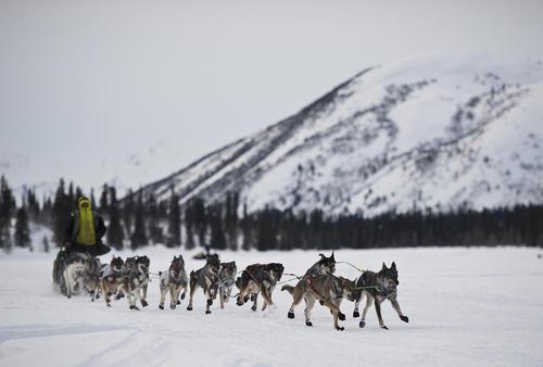 مسابقات سورتمه رانی با سگ در آلاسکا