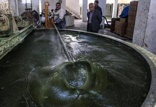 یک کارخانه تولید صابون روغن زیتون در شهر عفرین در استان حلب سوریه