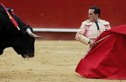 گاو بازی در والنسیا اسپانیا