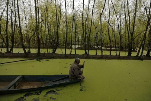 قایق سواری در دریاچه نگین در سرینگر کشمیر