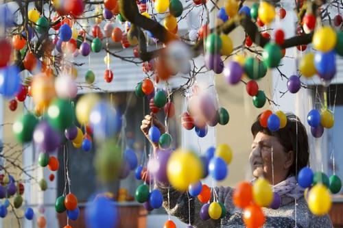 در آستانه عید پاک مسیحیان، یک زن مجار نخل های باغچه اش را با تخم مرغهای رنگی تزیین می کند. او امسال از ۲۵۰۰ قطعه تخم مرغ رنگی برای این منظور استفاده کرده است. عکس از وارگا گیورگی