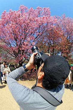 گرفتن عکس از نخستین شکوفه زنی درخت گیلاس در پارکی در شهر توکیو