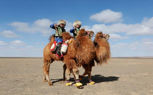 جشنواره شتر در مغولستان