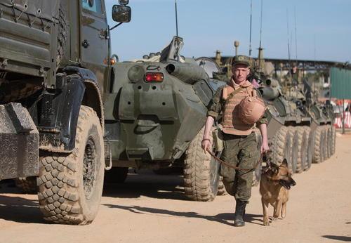 سگ های آموزش دیده و مین یاب ارتش روسیه در پایگاهی نظامی در لاذقیه سوریه و در حال اعزام به منظور جستجوی شهر تاریخی پالمیرا