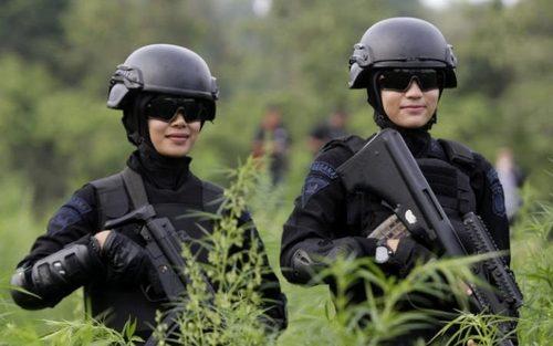 عملیات ویژه پلیس آچه اندونزی برای از بین بردن زمین های کشت حشیش