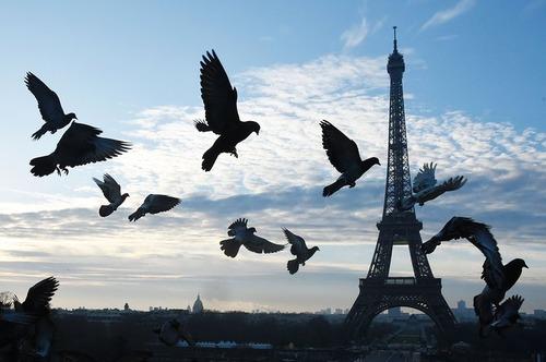 پرواز پرندگان بر فراز شهر پاریس