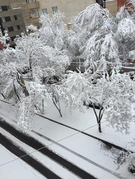 بارش برف در تبریز- سعید