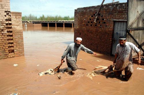 جمع آوری حیوانات غرق شده در سیلاب – پیشاور پاکستان