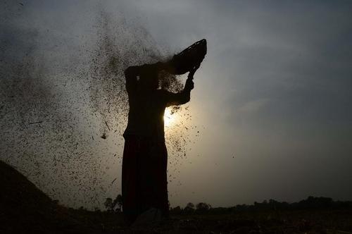 برداشت گندم در الله آباد هند