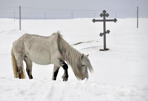اسب وحشی در روستایی در روسیه