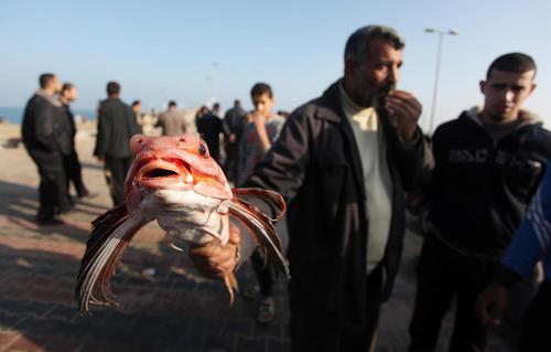 بازار فروش ماهی در ساحل غزه