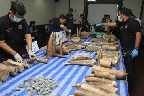 کشف یک محموله قاچاق عاج فیل از کنیا در فرودگاه بانکوک تایلند